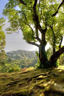 WHW-tree-light-Wellington-220px